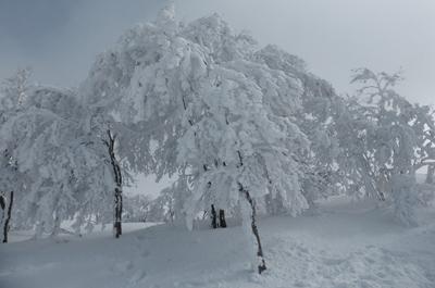 Myoko Kogen Trees Japan